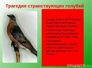 Трагедия странствующих голубей Чуть более ста лет назад в Северной Америке этот