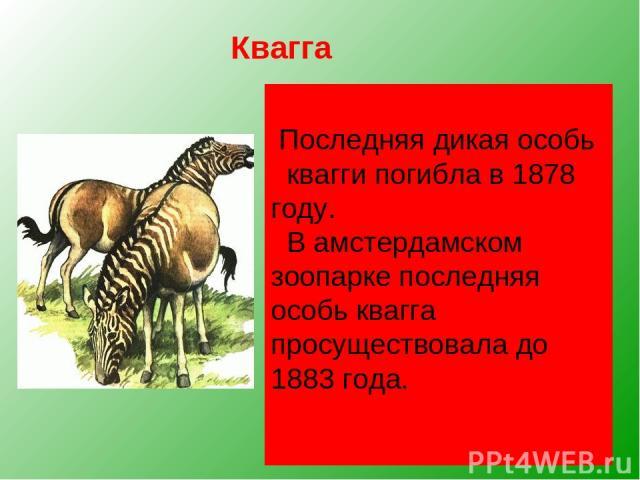 Квагга, обитавшая на юге Африки, была удивительным парнокопытным. Спереди она имела полосатую расцветку, как у зебры, сзади — гнедой окрас лошади. Буры истребляли кваггу ради её прочной шкуры. Квагга — едва ли не единственное из вымерших животных, п…