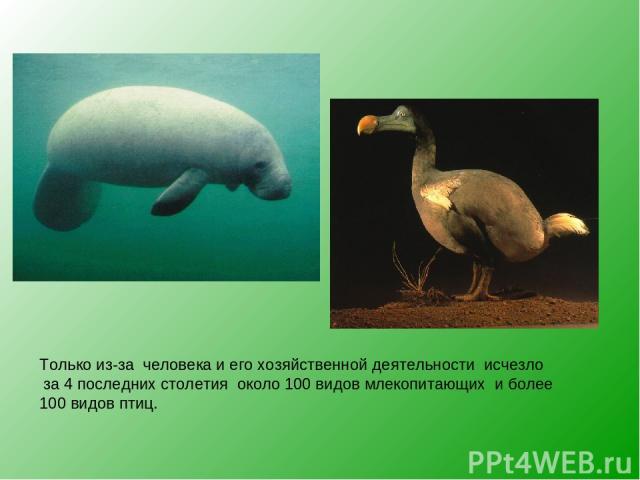 Только из-за человека и его хозяйственной деятельности исчезло за 4 последних столетия около 100 видов млекопитающих и более 100 видов птиц.