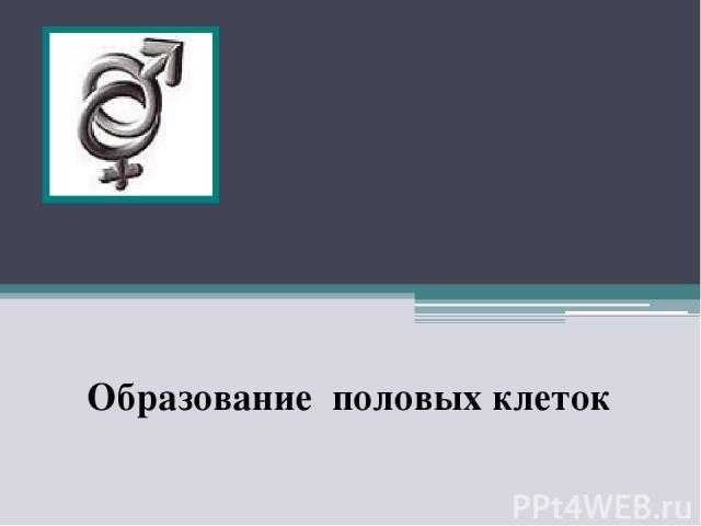 Образование половых клеток