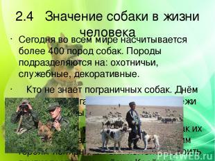 2.4 Значение собаки в жизни человека Сегодня во всем мире насчитывается более 40