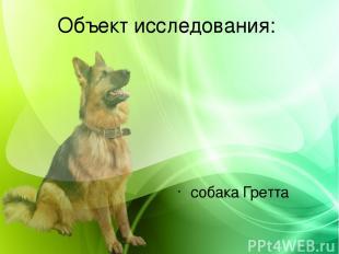 Объект исследования: собака Гретта