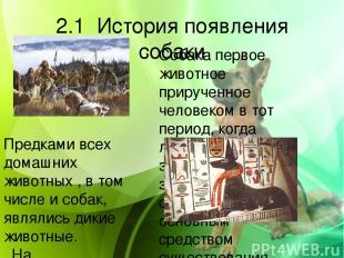 2.1 История появления собаки Собака первое животное прирученное человеком в тот