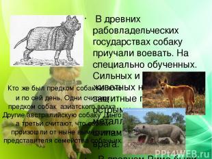 Кто же был предком собак не ясно и по сей день. Одни считают предком собак азиат