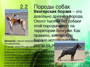 2.2 Породы собак Венгерская борзая – это довольно древняя порода. Около тысячи л