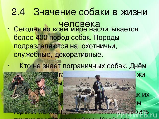 2.4 Значение собаки в жизни человека Сегодня во всем мире насчитывается более 400 пород собак. Породы подразделяются на: охотничьи, служебные, декоративные. Кто не знает пограничных собак. Днём и ночью помогают они охранять рубежи нашей Родины. Вели…