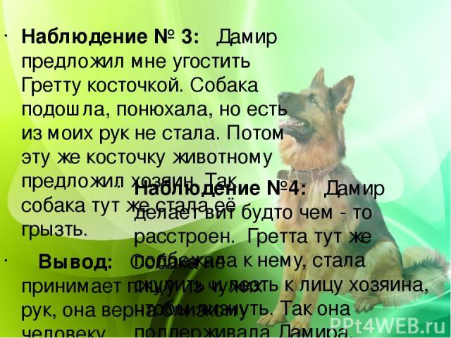 Наблюдение № 3: Дамир предложил мне угостить Гретту косточкой. Собака подошла, понюхала, но есть из моих рук не стала. Потом эту же косточку животному предложил хозяин. Так собака тут же стала её грызть. Вывод: Собака не принимает пищу из чужих рук,…