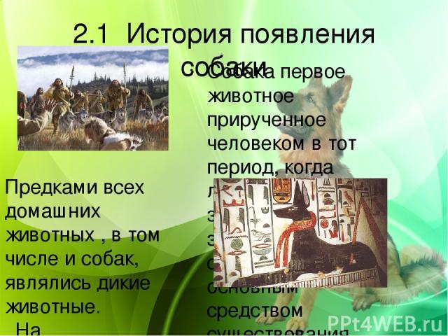 2.1 История появления собаки Собака первое животное прирученное человеком в тот период, когда люди еще не знали земледелия и скотоводства и основным средством существования людей была охота. Предками всех домашних животных , в том числе и собак, явл…