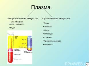 Плазма. Неорганические вещества: Органические вещества: белки Глюкоза Жиры Углев