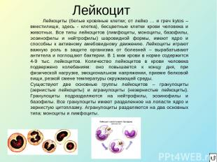 Лейкоцит Лейкоциты (белые кровяные клетки; от лейко … и греч kytos – вместилище,