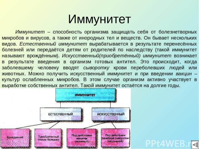 Иммунитет Иммунитет – способность организма защищать себя от болезнетворных микробов и вирусов, а также от инородных тел и веществ. Он бывает нескольких видов. Естественный иммунитет вырабатывается в результате перенесённых болезней или передаётся д…