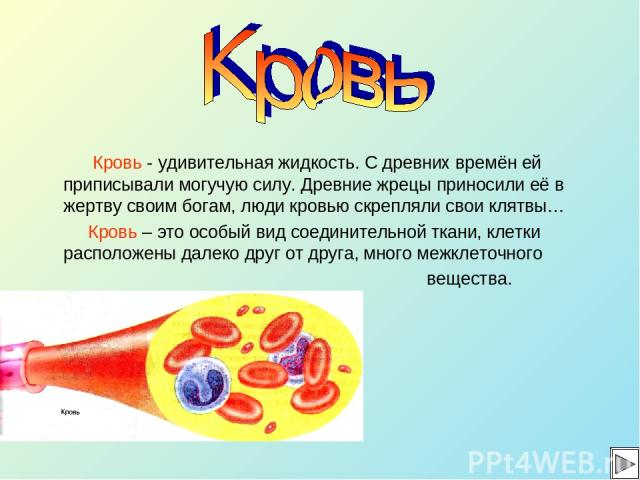 Кровь - удивительная жидкость. С древних времён ей приписывали могучую силу. Древние жрецы приносили её в жертву своим богам, люди кровью скрепляли свои клятвы… Кровь – это особый вид соединительной ткани, клетки расположены далеко друг от друга, мн…