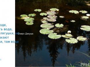 «Не везде, где есть вода, есть и лягушки, но где квакают лягушки, там вода есть»