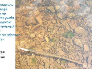 «Как в слишком чистой воде никогда не заведется рыба, так и слишком осмотрительн