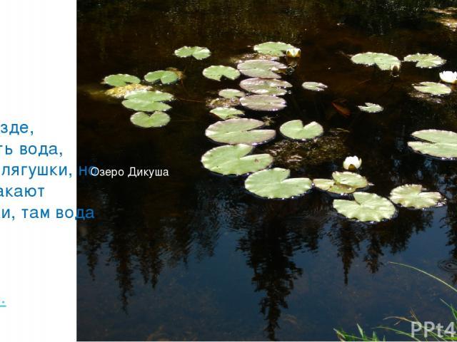 «Не везде, где есть вода, есть и лягушки, но где квакают лягушки, там вода есть» Гёте И. Озеро Дикуша
