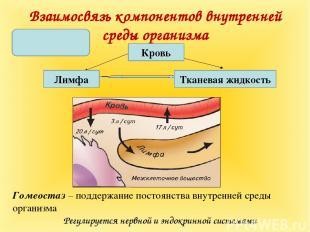 Взаимосвязь компонентов внутренней среды организма Гомеостаз – поддержание посто