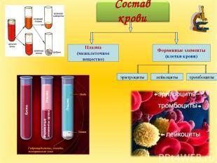 Плазма (межклеточное вещество) лейкоциты эритроциты тромбоциты Форменные элемент
