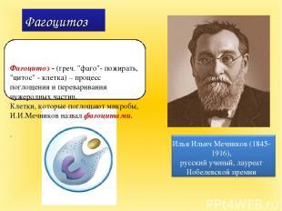 "Фагоцитоз Фагоцитоз - (греч. ""фаго""- пожирать, ""цитос"" - клетка) – процесс погло"