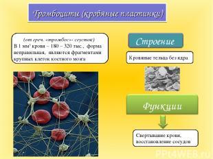 Тромбоциты (кровяные пластинки) (от греч. «тромбос»- сгусток) В 1 мм3 крови – 18