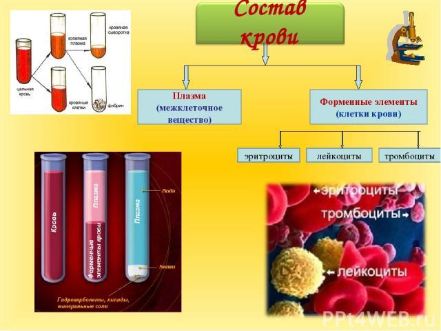 Плазма (межклеточное вещество) лейкоциты эритроциты тромбоциты Форменные элементы (клетки крови) Состав крови