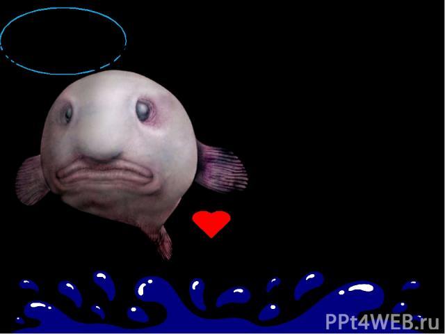 Широко расположенные глаза, странный отросток, напоминающий огромный нос….. Они придают унылое и печальное выражение рыбе - капле. Опущенные уголки рта завершают «грустный» внешний вид, о котором порой говорят «полная печалька». РЫБА - КАПЛЯ