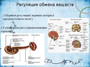 Регуляция обмена веществ 1.Нервная регуляция( нервные центры в промежуточном моз