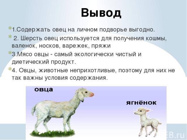 Вывод 1.Содержать овец на личном подворье выгодно. 2. Шерсть овец используется для получения кошмы, валенок, носков, варежек, пряжи 3.Мясо овцы - самый экологически чистый и диетический продукт. 4. Овцы, животные неприхотливые, поэтому для них не та…