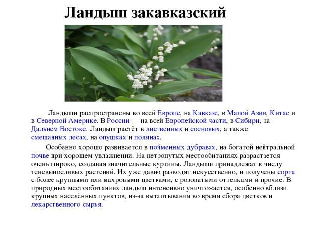 Ландыши распространены во всей Европе, на Кавказе, в Малой Азии, Китае и в Северной Америке. В России — на всей Европейской части, в Сибири, на Дальнем Востоке. Ландыш растёт в лиственных и сосновых, а также смешанных лесах, на опушках и полянах.&nb…