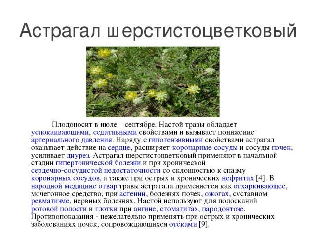 Плодоносит в июле—сентябре. Настой травы обладает успокаивающими, седативными свойствами и вызывает понижение артериального давления. Наряду с гипотензивными свойствами астрагал оказывает действие на сердце, расширяет коронарные сосуды и сосуды поче…