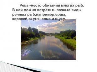 Река -место обитания многих рыб. В ней можно встретить разные виды речных рыб,на