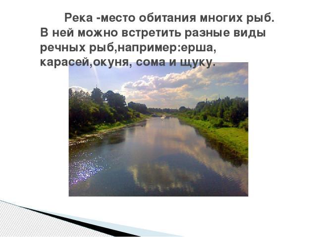 Река -место обитания многих рыб. В ней можно встретить разные виды речных рыб,например:ерша, карасей,окуня, сома и щуку.