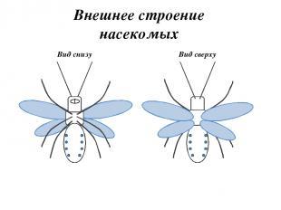 1 – Голова 2 - Грудь 3 - Брюшко 4 - Крылья 5 - Сложный глаз 6 - Антенна (орган о