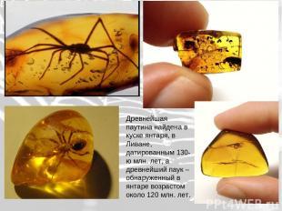 Древнейшая паутина найдена в куске янтаря, в Ливане, датированным 130-ю млн. лет