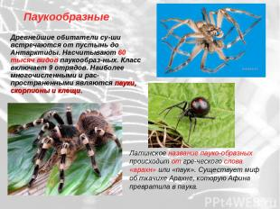 Паукообразные Древнейшие обитатели су-ши встречаются от пустынь до Антарктиды. Н