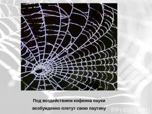Под воздействием кофеина пауки возбужденно плетут свою паутину