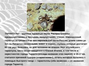 ТАРАНТУЛЫ - крупные ядовитые пауки. Распространены преимущественно в пустынях, п
