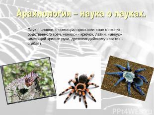 Паук - славян. с помощью приставки «па» от «онк», родственного греч. «онкос» - к