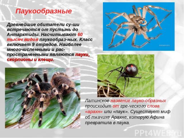 Паукообразные Древнейшие обитатели су-ши встречаются от пустынь до Антарктиды. Насчитывают 60 тысяч видов паукообраз-ных. Класс включает 9 отрядов. Наиболее многочисленными и рас-пространенными являются пауки, скорпионы и клещи. Латинское название п…