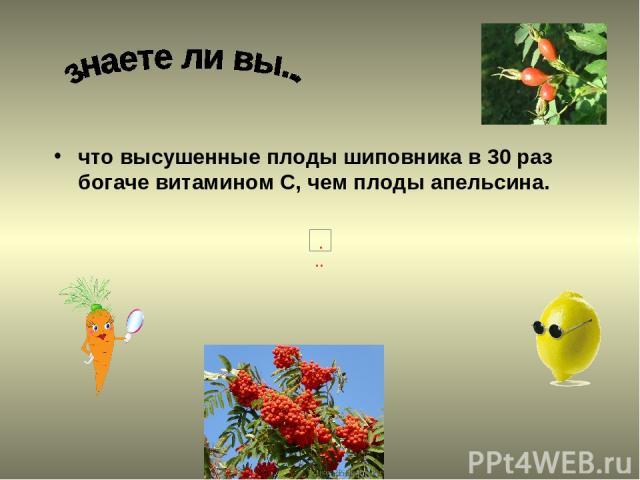 что высушенные плоды шиповника в 30 раз богаче витамином С, чем плоды апельсина.