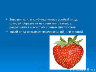 Земляника или клубника имеют особый плод, который образован не стенками завязи,