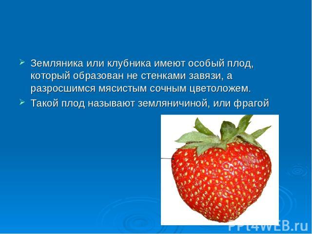 Земляника или клубника имеют особый плод, который образован не стенками завязи, а разросшимся мясистым сочным цветоложем. Такой плод называют земляничиной, или фрагой