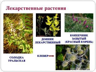 Лекарственные растения СОЛОДКА УРАЛЬСКАЯ КЛЕВЕР ДОННИК ЛЕКАРСТВЕННЫЙ КОПЕЕЧНИК З