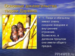 Основные доказательства теории Дарвина 1. Люди и обезьяны имеют очень сходное вн