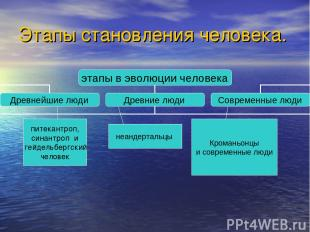 Этапы становления человека. питекантроп, синантроп и гейдельбергский человек неа