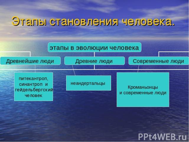 Этапы становления человека. питекантроп, синантроп и гейдельбергский человек неандертальцы Кроманьонцы и современные люди