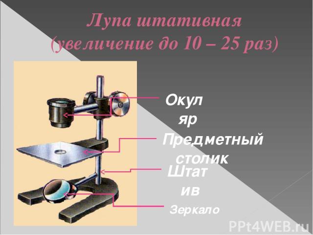 Лупа штативная (увеличение до 10 – 25 раз) Предметный столик Штатив Зеркало Окуляр