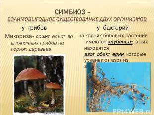 у грибов Микориза- сожительство шляпочных грибов на корнях деревьев у бактерий н