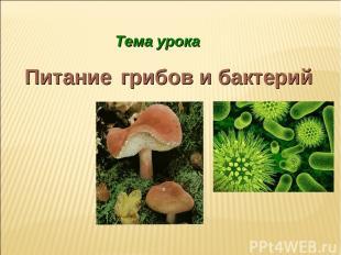 Тема урока Питание грибов и бактерий