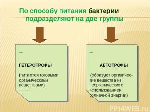 По способу питания бактерии подразделяют на две группы ГЕТЕРОТРОФЫ (питаются гот