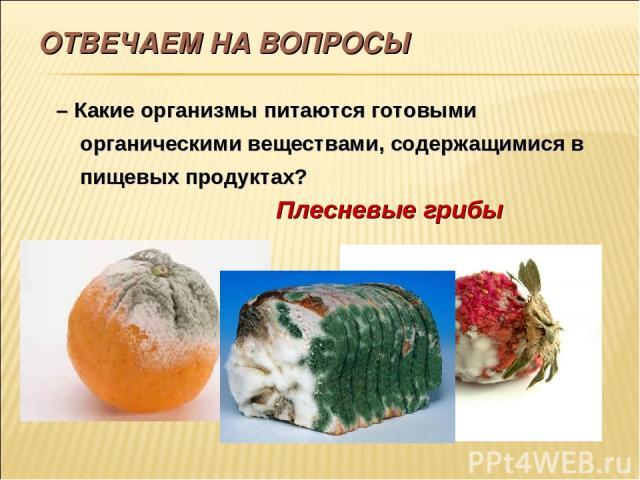 ОТВЕЧАЕМ НА ВОПРОСЫ – Какие организмы питаются готовыми органическими веществами, содержащимися в пищевых продуктах? Плесневые грибы